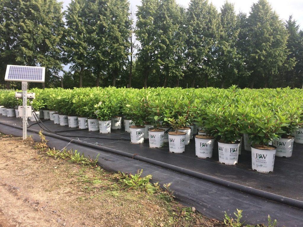 field grown plants in pots