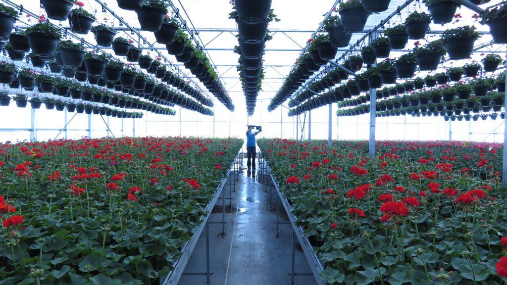 inside a greenhouse